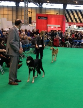 crufts coco and georgie 2