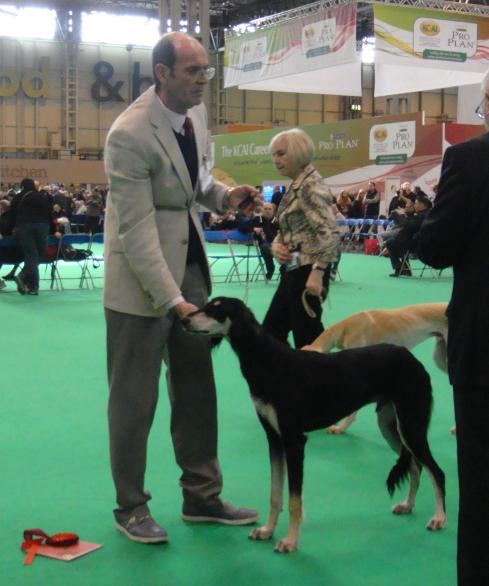 butler 1st mpd crufts 2015