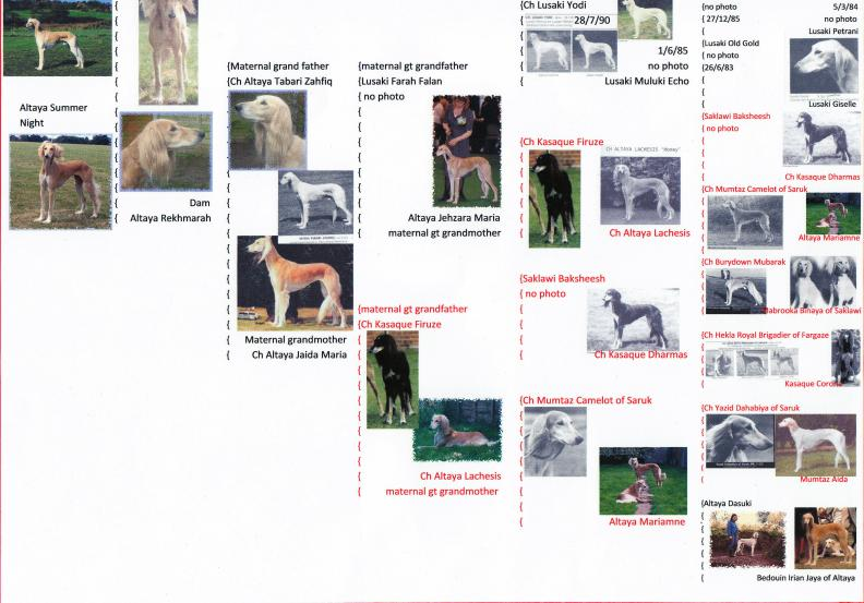 pip's photo pedigree bottom