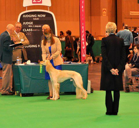 tammas at crufts 2013